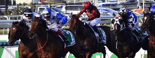 Areca Legend' wins Stewards Cup