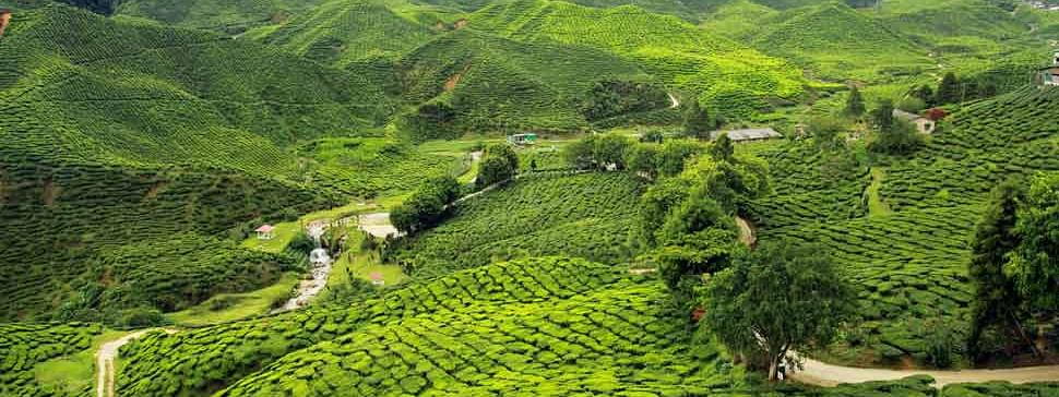 New e-marketplace for tea in Jorhat