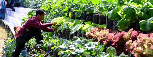 Horticulture still plays big role in HP economy