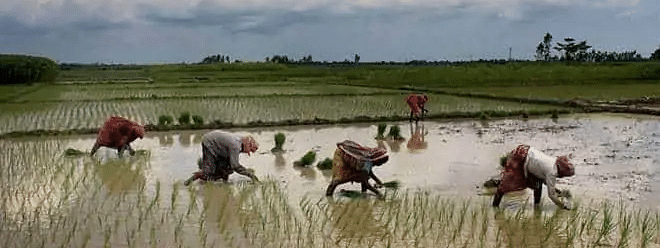 Slow progress of monsoon delays sowing of crops