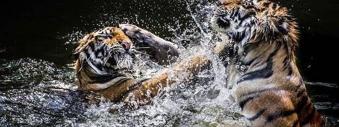 Indira's vision saved our jungles and tigers: MP CM