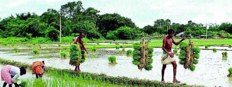 Paddy crop inundated in hundreds of acres in West Godavari