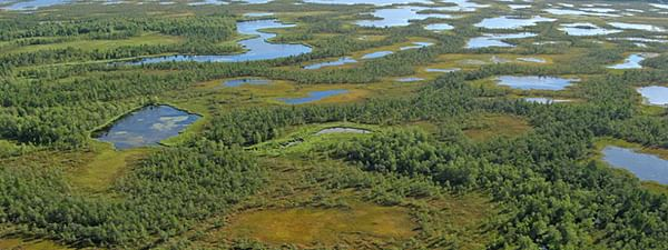 Scientists say peatlands' impact on climate change can be measured