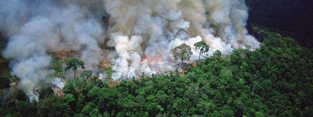 Bollywood expresses concern over Amazon rainforest wildfires