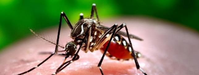 Dengue epidemic looms large over Bangladesh