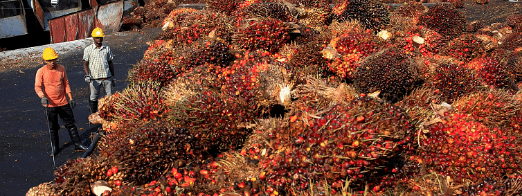 India agrees to reduce export tariff on Indonesian Palm Oil