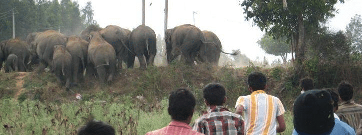 Deforestation led to increased human-elephant conflict: Study