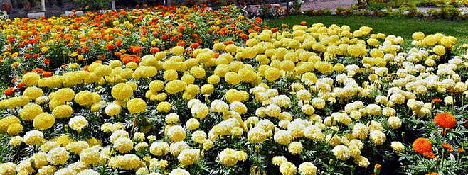 Flower show with over half a million petals to create life size models this year