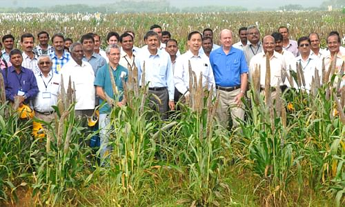Newly developed sorghum hybrid using ICRISAT breeding material receives special recognition