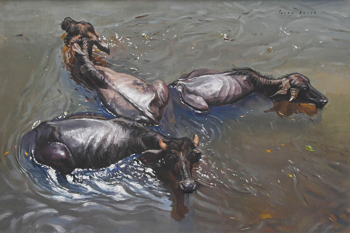 Buffaloes bathing in the river
