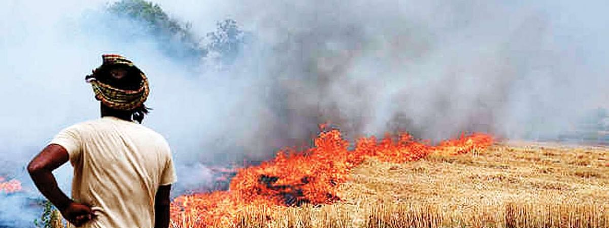 More than 300 FIRs filed over stubble burning