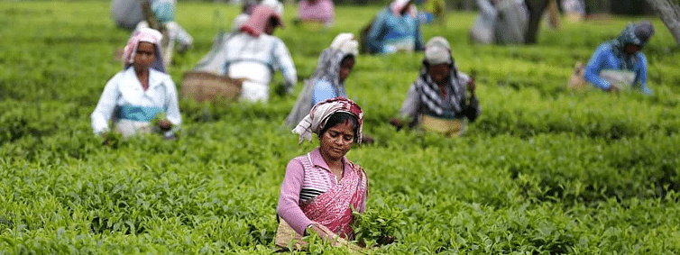 Assam tea garden workers not getting minimum wages