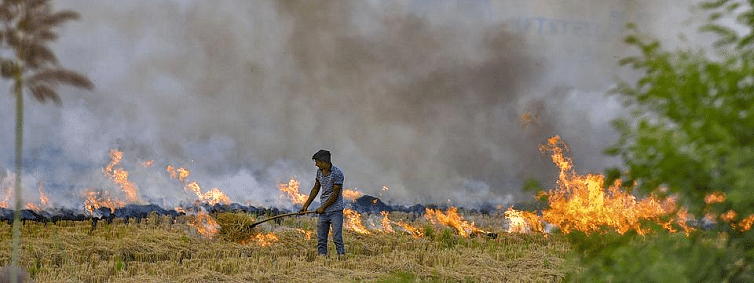 Fall in stubble residue burning in UP, Punjab, Haryana: Govt