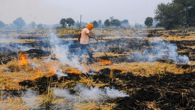 Action taken against 2,923 farmers in Punjab for stubble burning