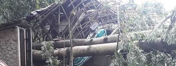 "Trail of destruction in Bengal due to ""Bulbul""; Two killed"