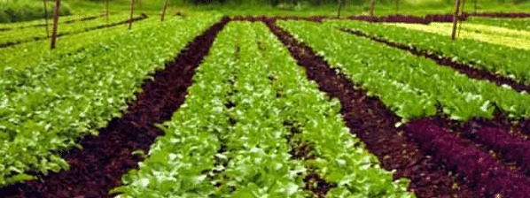 Experts express concern over soil degradation, appeal for organic farming