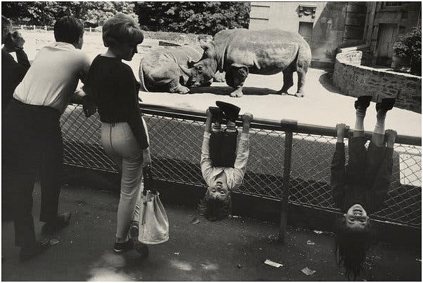 A rather quirky photo of two kids hanging upside down on a zoo fence. The two kids are juxtaposed with the two rhinos in the background to create visual interest. The bystander woman's attention is directed towards the children which further strengthens the focal point of interest.