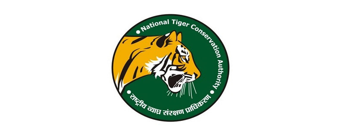 Goa may become death-trap for tigers: NTCA report