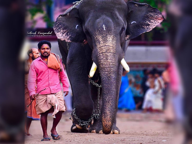 The Story of a Brave Mahout