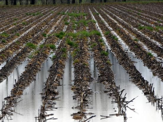 Crops suffer damages due to unseasonal rains in UP