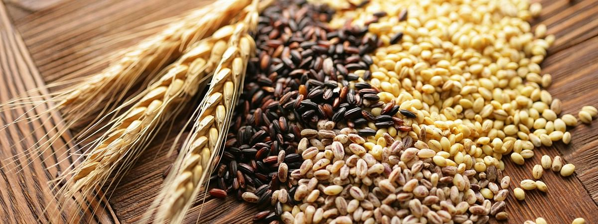Ahmedabad grain market shows firm trend