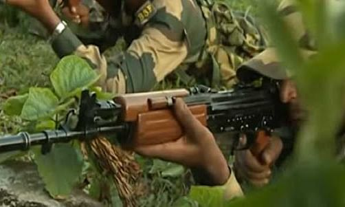 BSF recovered cannabis worth of Rs 1.63 cr from Tripura forest