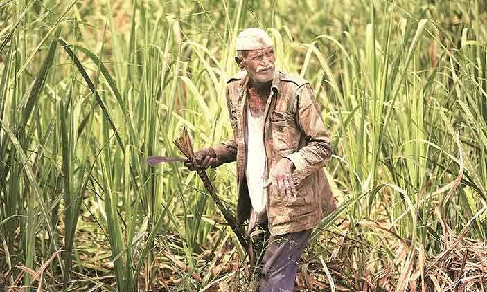 Rs 340 per quintal being given to sugarcane farmers : Haryana Min