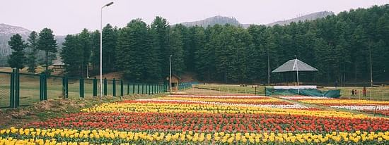 Jammu flower garden, Sanasar Tulip garden wear deserted look amid COVID lockdown