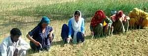 Good response to crop diversification prog by Punjab farmers