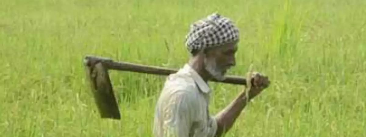 Punjab directs all Dist. Agri. officers to launch remove weeds campaign
