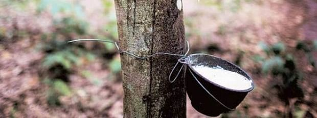 Production of Natural Rubber rises to 7.12 lakh tonnes in India