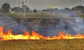 Four Mirpur farmers booked for straw burning