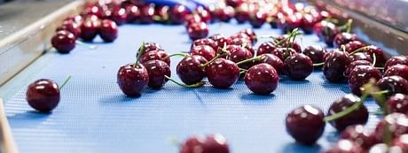 Covid-19 casts shadow on cherry crop in Kashmir, growers staring at losses