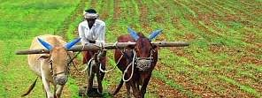 Govt approves to extend repayment date for short term agricultural loans