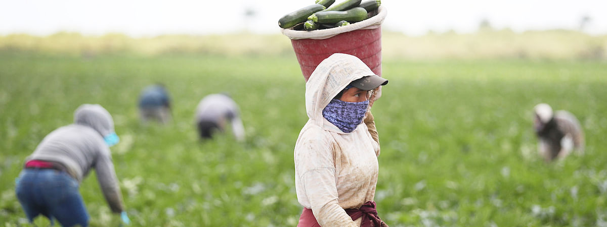 Farm package: Traders, exporters have better reasons to rejoice