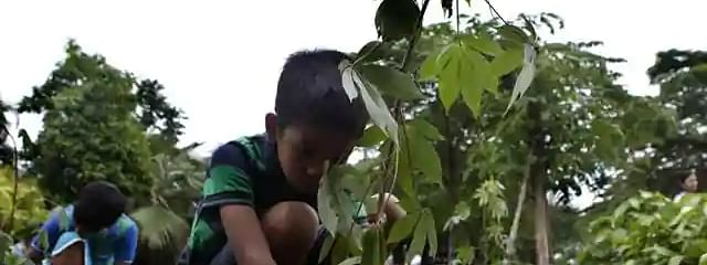East Delhi Mayor plants trees on World Environment Day