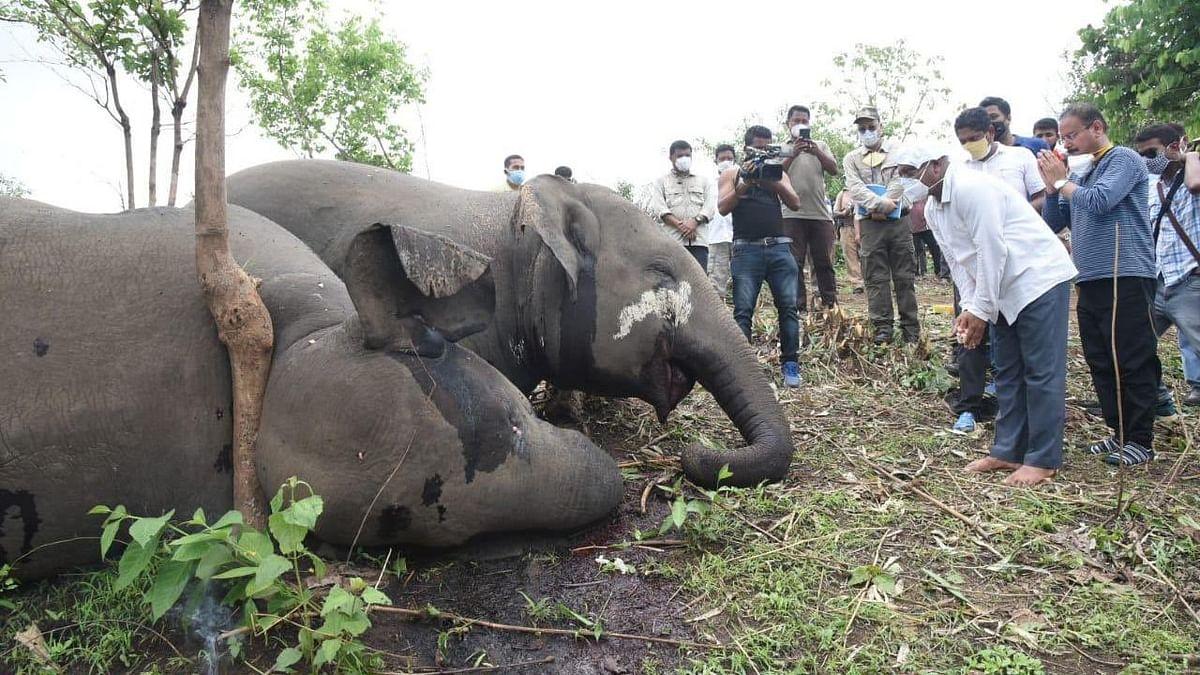 Assam: বাজ পড়ে ১৮ বুনো হাতির মর্মান্তিক মৃত্যু