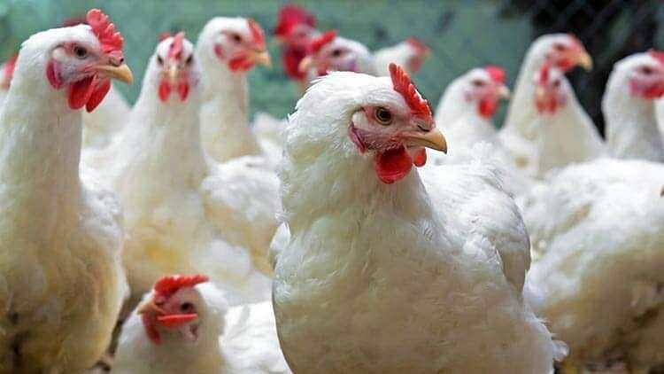 Haryana: দিল্লি AIIMS-এ Bird Flu-তে মৃত্যু নাবালকের, সতর্কতা জারি