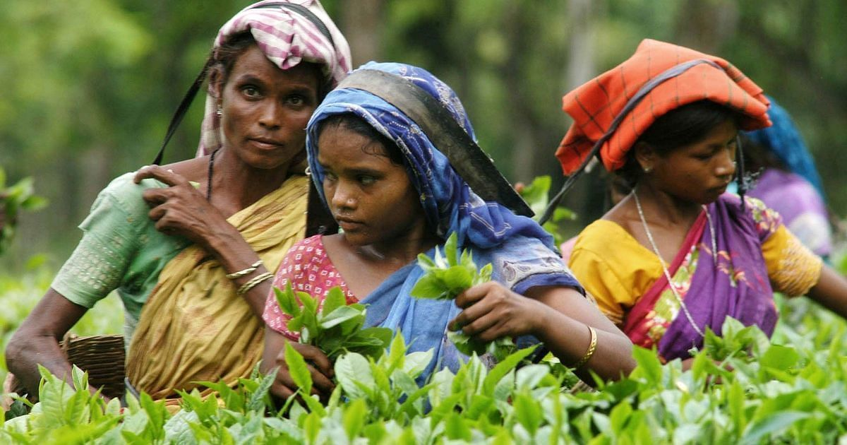 Assam: প্রায় ১৫ হাজার চা শ্রমিক করোনা আক্রান্ত, মাত্র ১ শতাংশের টিকাকরণ সম্পূর্ণ হয়েছে