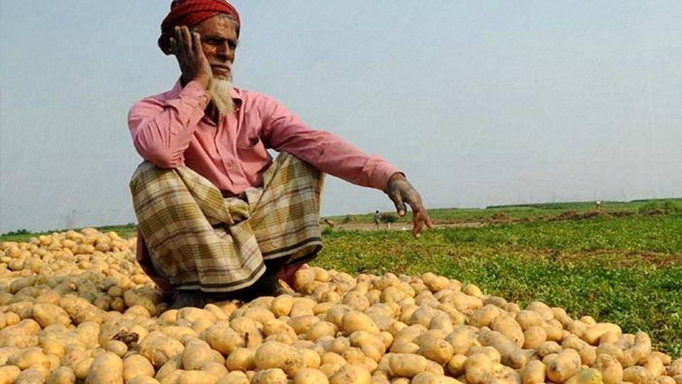 WB: আলুর দাম কিলো প্রতি ৫ টাকা, মাথায় হাত চাষিদের
