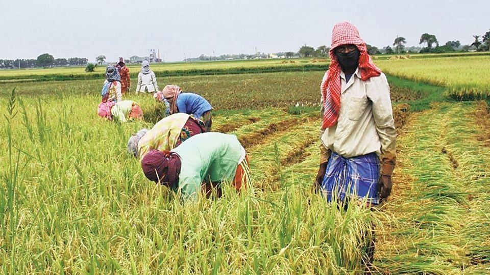 রাজ্যের কৃষকরা ন্যূনতম সহায়ক মূল্য (MSP) পাচ্ছেন না, দাবি কিষান সংগ্রাম সমন্বয় সমিতির