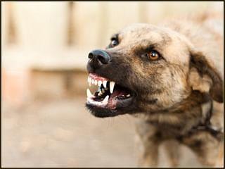बिहार: एक साल में 3 लाख लोगों को कुत्तों ने काटा, इन तीन जिलों को छोड़ सभी जिलों के लोग हुए शिकार...