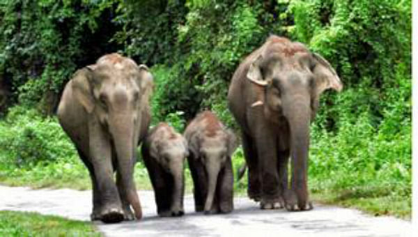 बिहार के नवादा में दिन भर चलता रहा पागल हाथी का तांडव, छह को कुचला, चार मरे