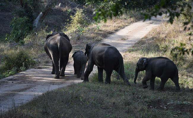 बेतला अभ्यारण्य  में हाथी का शिकार, हाथी दांत तस्करों पर शक