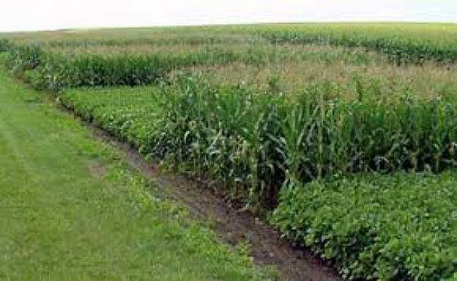 इस बार झारखंड में 52 लाख टन खाद्यान्न के बंपर उत्पादन की उम्मीद