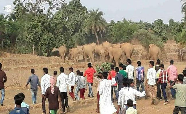 मधुपुर पहुंचा हाथियों का झुंड, एक को कुचल कर मार डाला, कई घर किये ध्वस्त