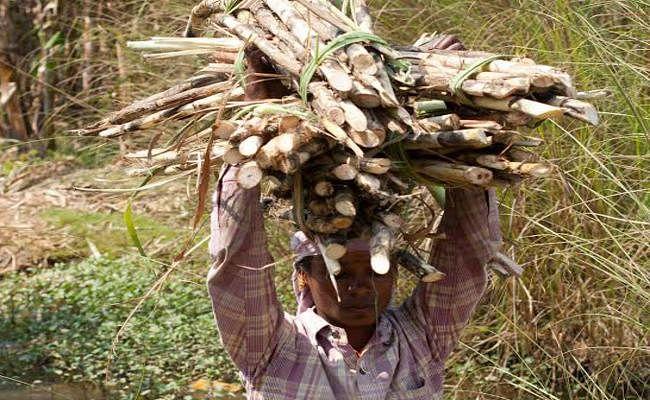 गन्ना किसानों की आमदनी बढ़ाने के लिए चीनी के आयात शुल्क में इजाफा करेगी सरकार