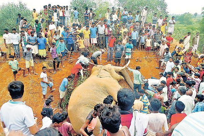 जमीन से पांच फीट ऊपर झूल रहा था हाई टेंशन का तार, हाथी का सिर सटा, मौत