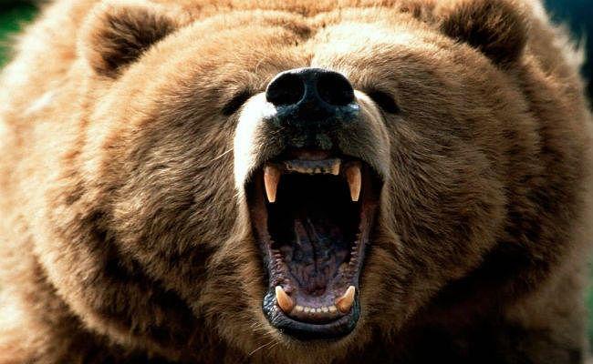 छत्तीसगढ़ : भालू के हमले में दो महिला समेत चार ग्रामीणों की मौत, तीन घायल