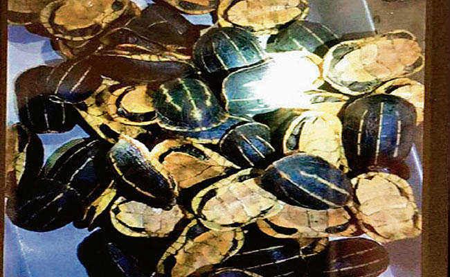 डीआरआई ने 270 कछुओं के साथ एक तस्कर को पकड़ा